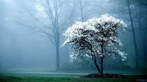 tree-fog-garden