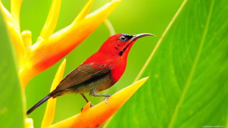 bird-wallpaper